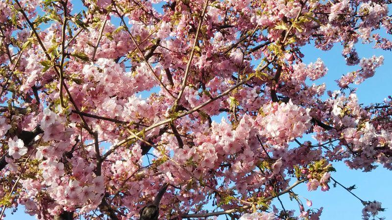 もう春ですね(^O^)/